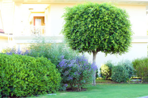 Tree Pruning Services in St. Louis